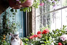 ogród domowy