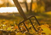 Gartenvorbereitung für Winter / Den Garten für den Winter vorbereiten. Hier findet Ihr Tipps und Tricks.