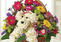 SIMPATICHE COMPOSIZIONI FLOREALI / fiori