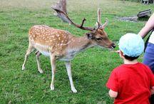Tierisch gut- Ausflüge in München und Umgebung / Hier findet ihr eine tolle Auswahl an Ausflügen in denen Kinder und Familien in Kontakt mit Tieren kommen oder diese beobachten können.