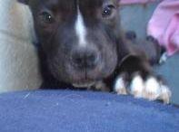 Please Adopt & Rescue