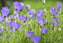 Garden Inspirations / by Ann Osterling-Dampier