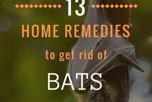 Pest Control - Home Remedies / Effective Natural home remedies to get rid of pest - Safe, Non-toxic Methods & Solutions.