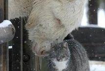 přátelství / lidí, zvířat