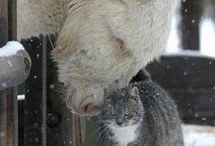 Animals *Love* / by Kim Mcclure