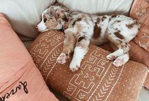 puppies goals