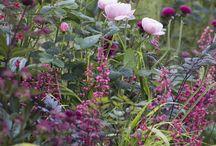 Uteblomster // Garden