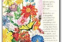 Attracting Butterflies Seeds - Botanical Interests