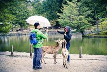 Pictures of Nara