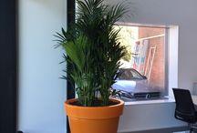 Hydrocultuur - planten / Hydrocultuur planten