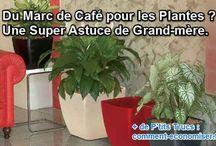 plantes marc de café