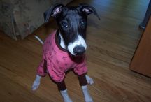 Sighthound Thermal Pajamas / Thermal Pj's Pajamas for Italian Greyhounds and  Whippets