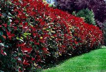 Bordering Plants