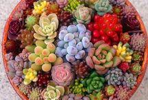 Etli yapraklı bitkiler