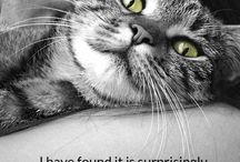 Best Cat Quotes