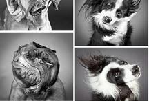 BIG puppies... dogue de bordeaux and more...