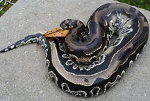 other unknown snakes to check
