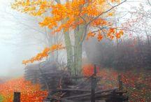 Feel Good Images - Autumn