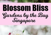 Singapore / Singapore travel and tourism, sightseeing, food and accommodation