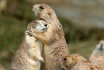 Awesome animal photos