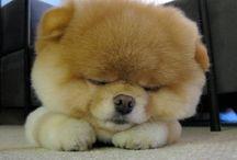 so cute! / by Megan Willis