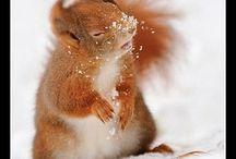  Cute  ånimåłs // pets / A lot of cute animals / by Bethany Posey