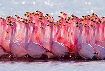 la vida rosa / by Wanda Lis Gar