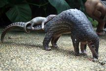 pangolin n anteaters