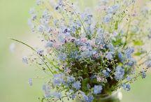 Garden Idea's and Flowers