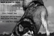 Husky Heaven Rescue / Husky Heaven Rescue is a non-profit organisation that specialises in the rescue and re-homing of huskies and other Nordic breeds of dogs.