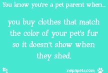 You know you're a pet parent when... / We all have those moments, the ones where we realize we're not like other people. Something in our life makes us do things a little bit different, look at life in a different way.  That something is our pets.