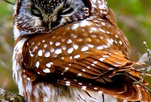 My Cutes OWL