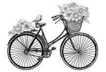 Fahrräder/Fahrzeuge