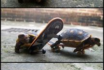 Turtles / by Genny Terrapin