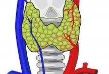 Thyroid stuff