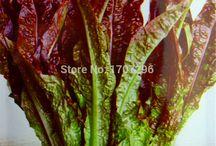 legumes verdura