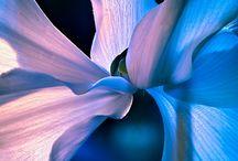 Gardening / by Simone Bettany