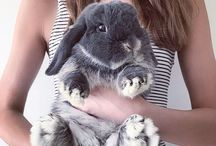 Bunnies and Guinea Pigs