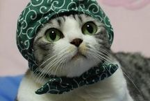 kittens, meow & rawr