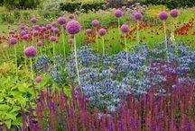 Planten paarse tuin