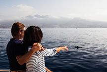 Avistamiento de cetáceos // Whale and dolphin watching / Tenerife es un destino de referencia mundial para el avistamiento de cetáceos.  21 de las 79 especies existentes en todo el mundo viven aquí. // Tenerife is one of the best places in the world to watch whales and dolphins. 21 of the 79 species in the world live here // Teneriffa ist einer der besten Orte weltweit, um Delfine und Wale zu beobachten. 21 der 79 Arten leben hier.