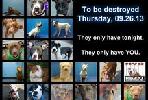 !Pets needing to be rescued ASAP!