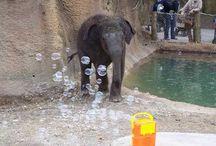 st louis zoo fun