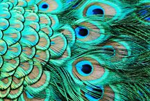 obsession / simply peacocks. {obsessed is putting it lightly...} / by Monica Sethi