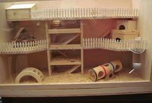 future hamster house