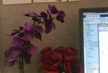 Cubicle Bliss