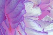 ❥ Purpalicious / Precious, Perfect, Profound, Proper and of course Pretty Purple!