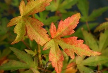 Autumn / Lets celebrate some of the beautiful colours of Autumn and bounty of the season.
