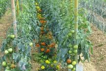 Vegetable Garden 2013 / by Emilee Fortner