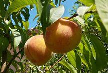 frutas del jardín